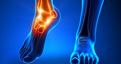 a bokaízület és a borjú izmainak fájdalma